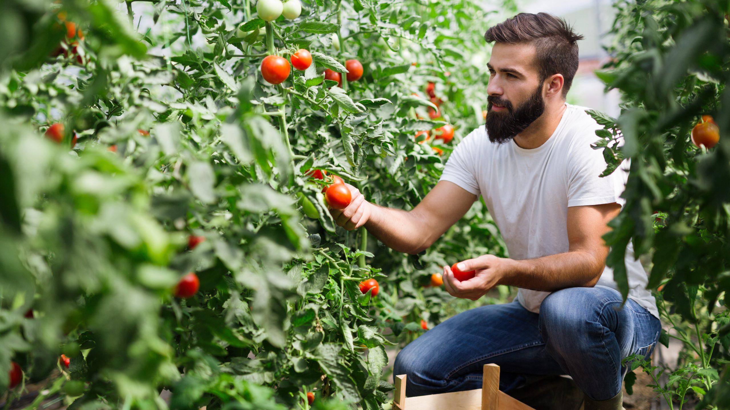 FoodUp beeld tomaten informail