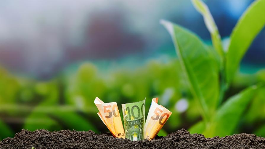 Geld en plantjes (1) Webinar
