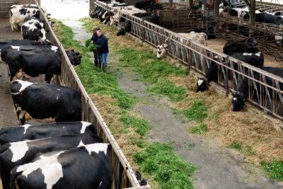 Nederland,  Erp, Het gaat om fotografie ter ondersteuning van een artikel over het coachingstraject dat melkveehouder Siebe volgt om zijn bedrijf natuurinclusief te maken. Hij wordt hierin gecoached door Gerard Willems die hem helpt om een businessplan met verdienmodel op te stellen om zijn bedrijf om te schakelen naar natuur landbouw. Graag zie ik daarbij beelden van de 2 mannen die (vooral buiten) al lopend, overleggend en wijzend over het bedrijf lopen, bij de dieren, de winkel, het terrein. Bij voorkeur ook wat natuurelementen in beeld brengen als die aanwezig zijn, bijv natuur-akkerranden. Mss ook nog een paar beelden aan de boeren keukentafel.